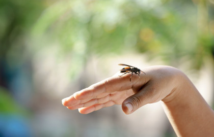 Qué hacer si te pica una avispa: retirar el aguijón y aplicar frío en la zona.