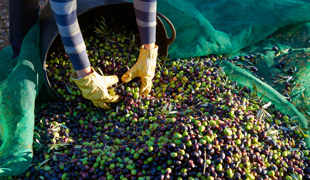 El aceite de oliva, ingrediente básico en la dieta mediterránea