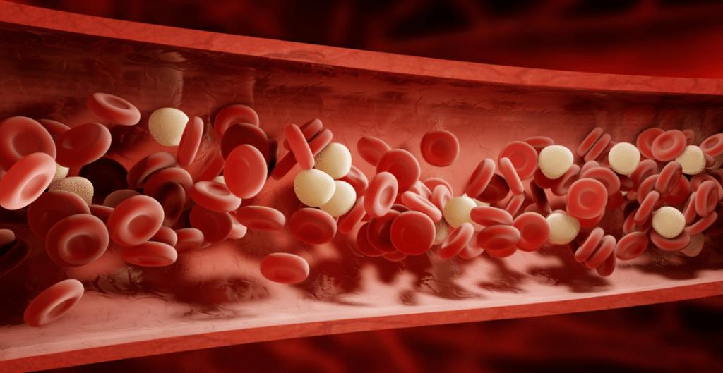 La sangre es el componente del sistema circulatorio encargado de transportar los nutrientes.