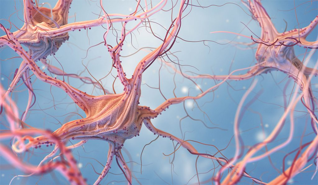 El cerebro humano tiene millones de neuronas, que se encargan transportar información.